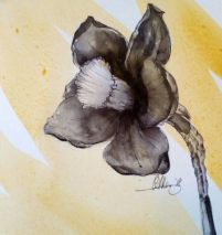 Daffodil - ink and wash